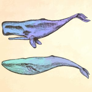 Whale - purple illustration