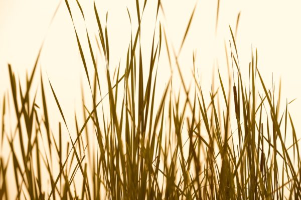 Grass Abstract Sepia