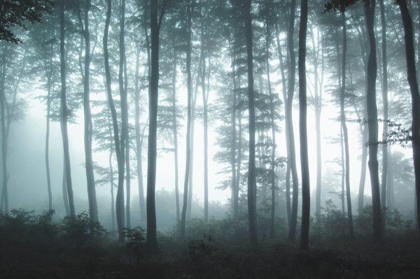 Misty forest haze