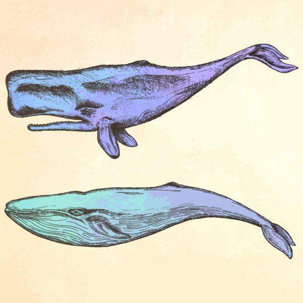 Whale purple illustration